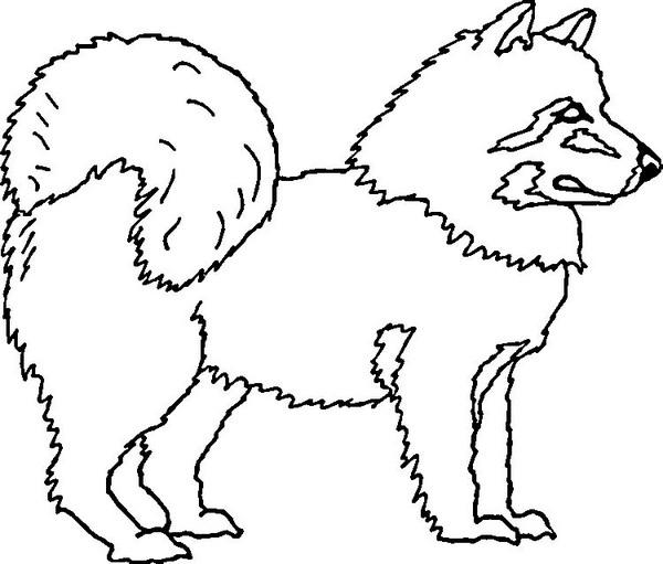 Kolorowanki Pies Owczarek Kolorowanka Do Wydruku Darmowe