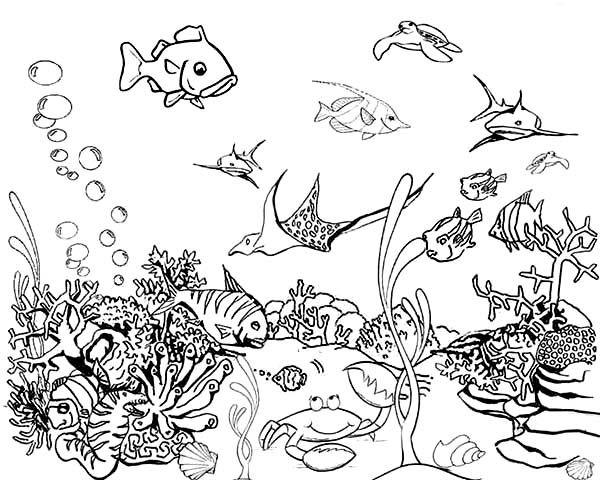Kolorowanki Ryby Malowanki