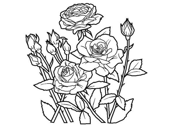 Kolorowanki Kwiatki Malowanki