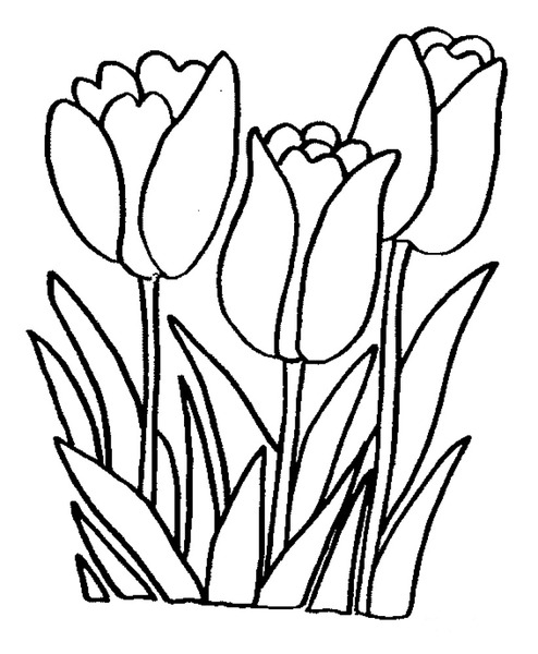 Wiosenne Kwiatki Tulipany
